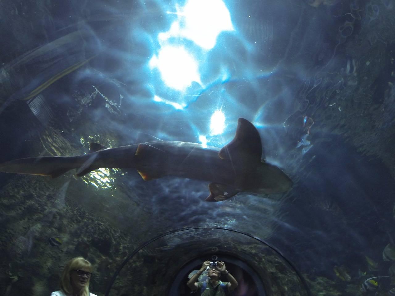 Акула Лоро парк
