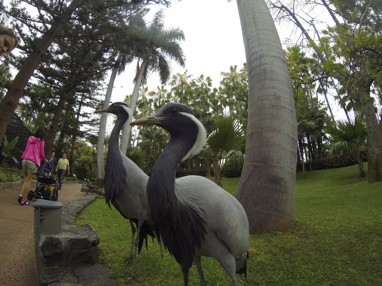 Зоопарк Loro Park