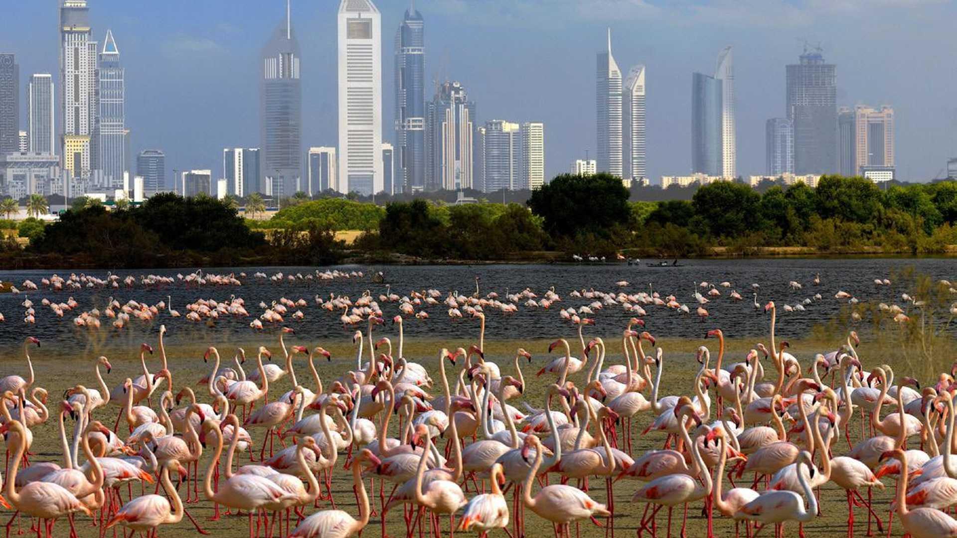 Аренда авто в Дубае. Цены и рекомендации по прокату в ОАЭ.